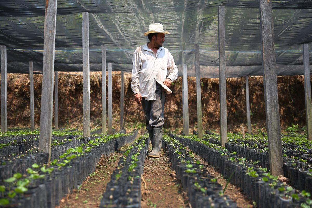 Starbucks commits $20m aid for Central American coffee farmer 'crisis'